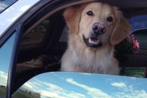 Teddy In Car Smile